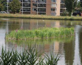 2 Rotterdam Pr. Alexander Polder- Aqua-Flora Floatlands