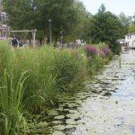 1 Rotterdam Zwaanhalskade- Aqua-Flora rollen