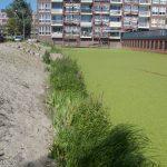 4 Den Haag Baaklaan - Aqua-Flora matten